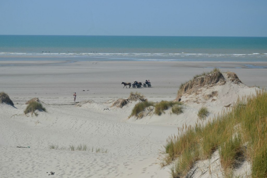 attelage chevaux plage