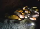 grotte Ardèche
