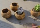 cactées pot fibre de coco