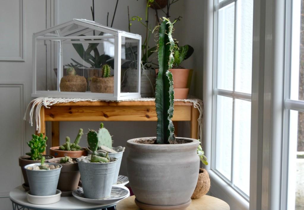 cactus - macramé