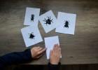 peinture insectes