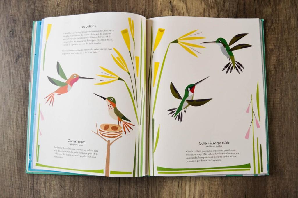 livre enfant oiseaux_