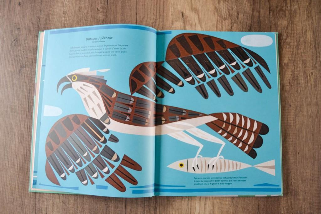 livre oiseaux illustrations
