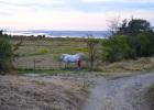 saint-valery-sur-somme chevaux