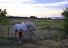 saint-valery-sur-somme chevaux 2