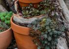 décoration avec pots cassés