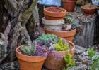 récup pots cassés succulentes