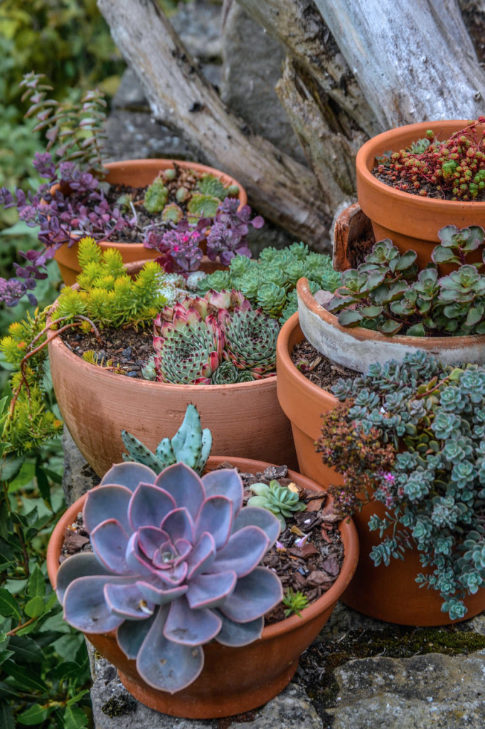 succulentes pots cassés récup
