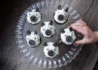 cupcakes animaux