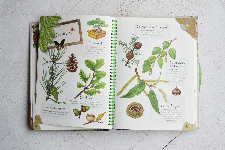 Un herbier pour les enfants - Maman à tout faire