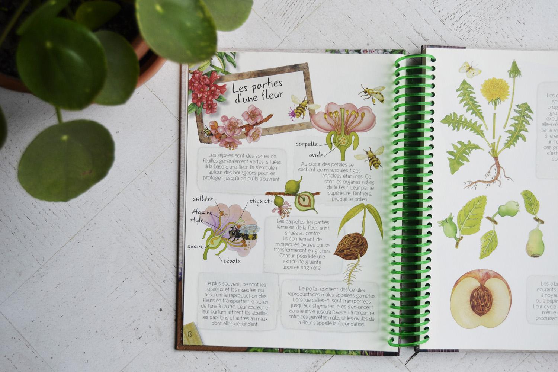 Graines De Fleurs Qui Poussent Très Vite un herbier pour les enfants - maman à tout faire